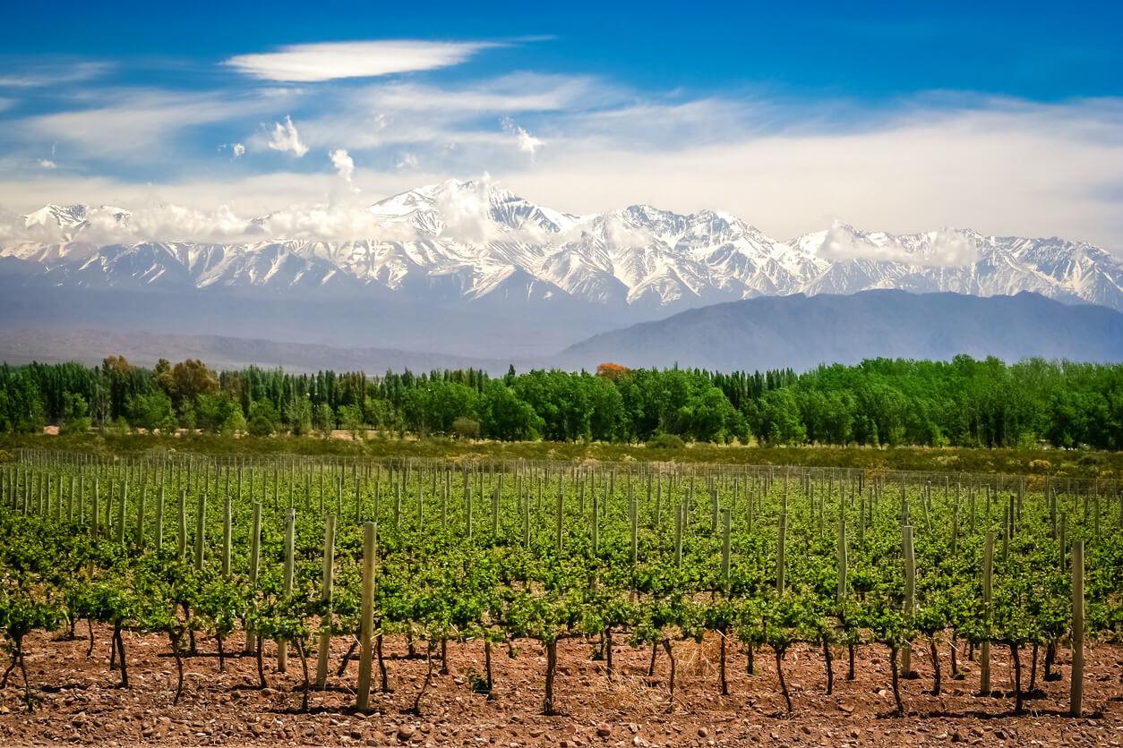 Argentijnse wijn: de gids