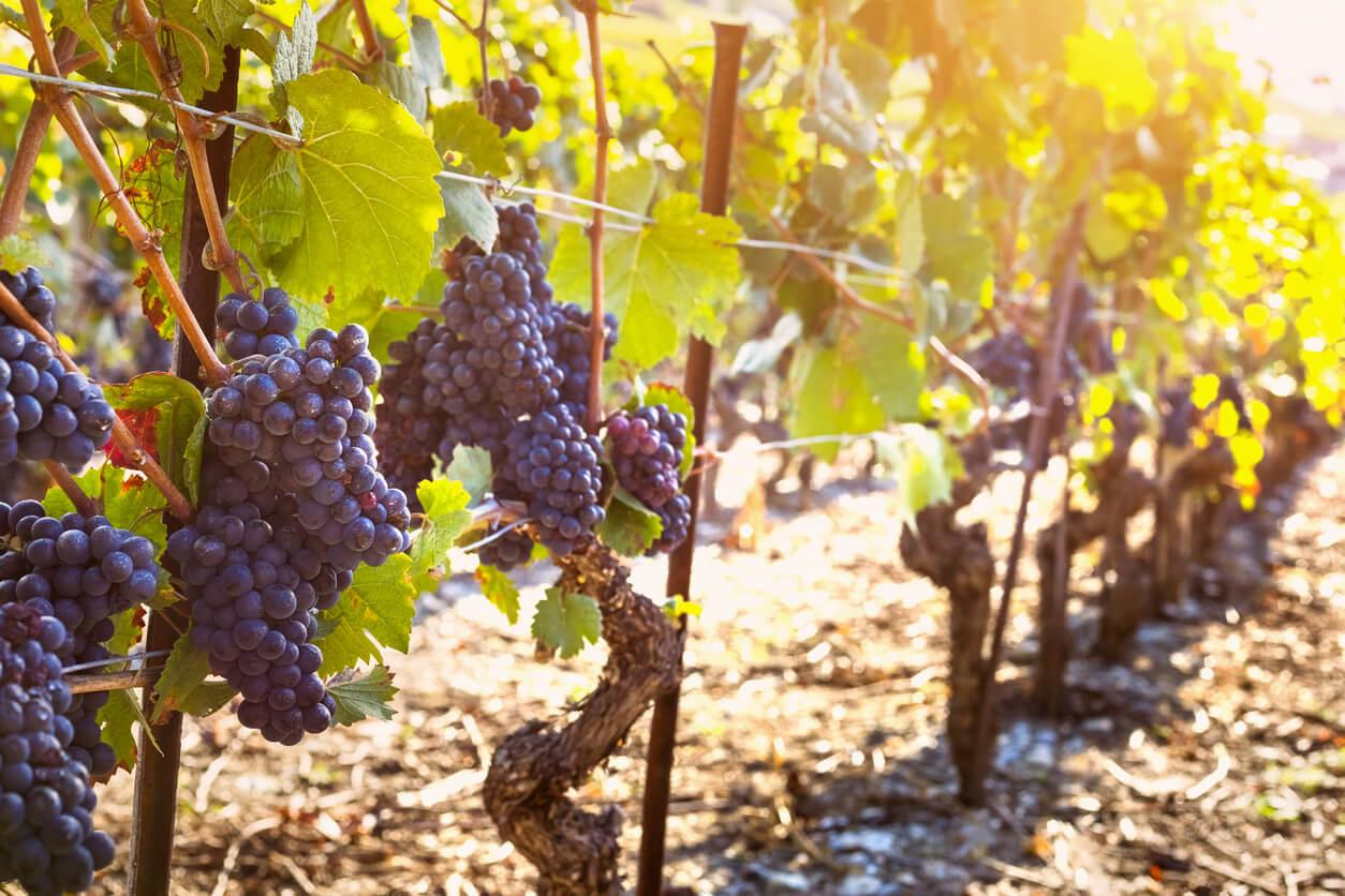Malbec wijnen: de gids