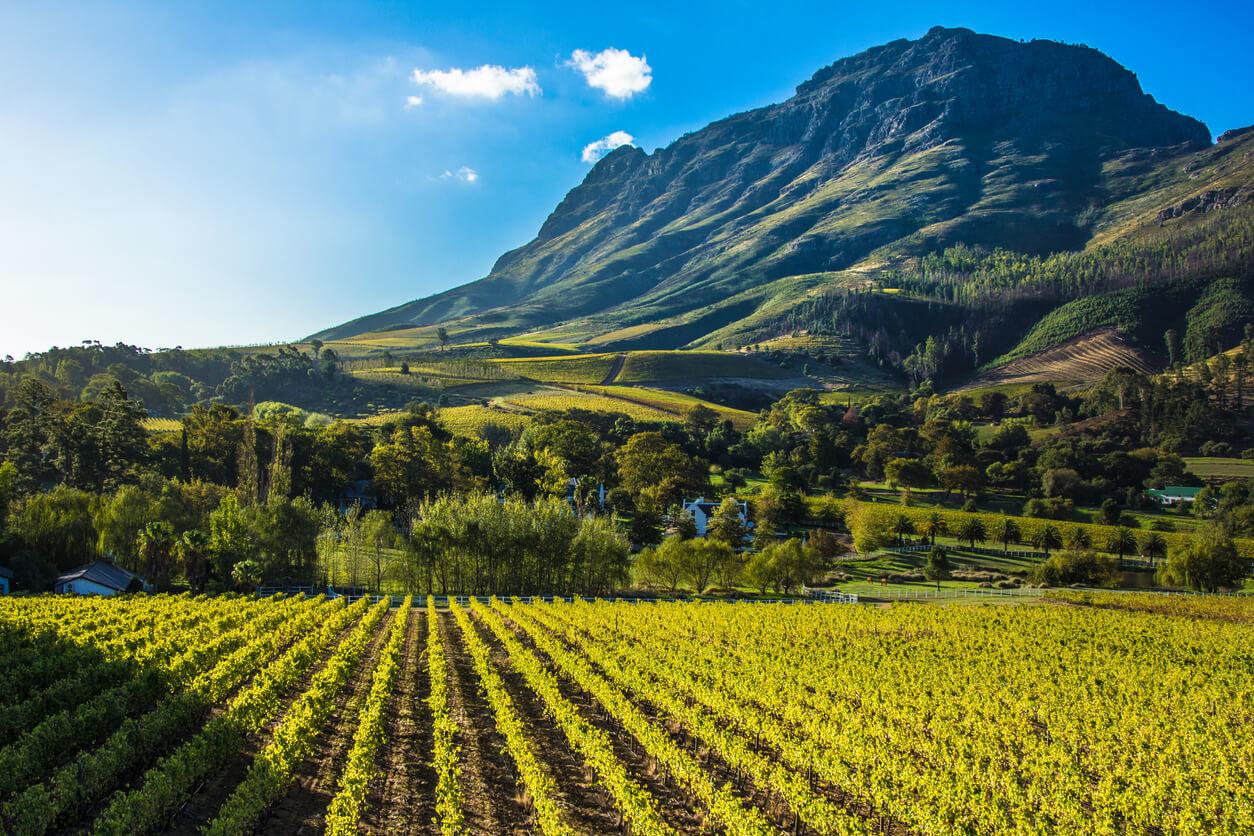 Zuid-Afrikaanse wijnen: de gids