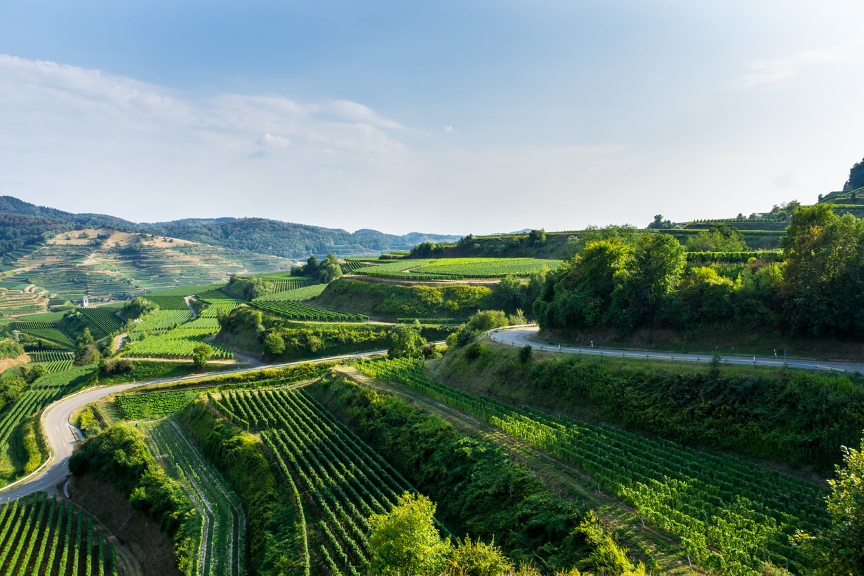 Duitse wijnen: de gids