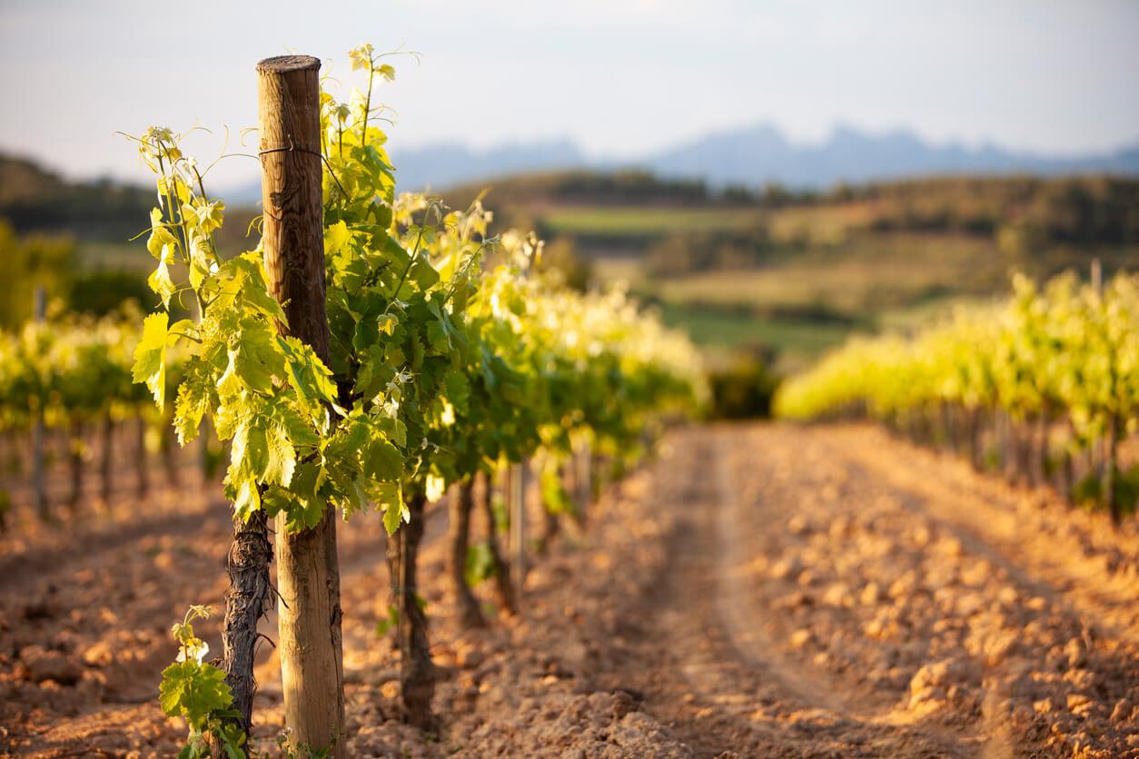 Een overzicht van zoete Spaanse wijnen