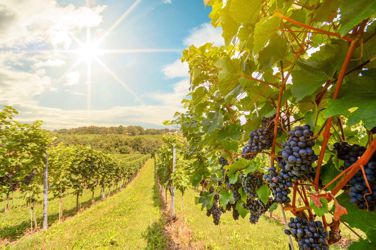 Australische wijn: de gids