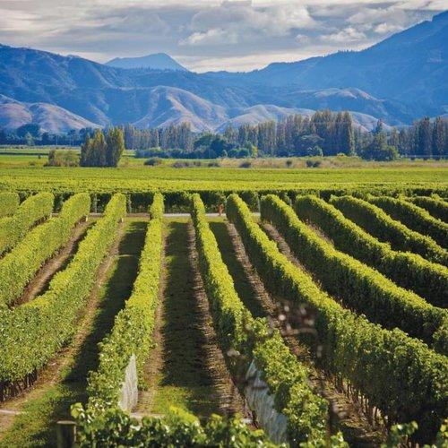 Nieuw-Zeelandse wijn