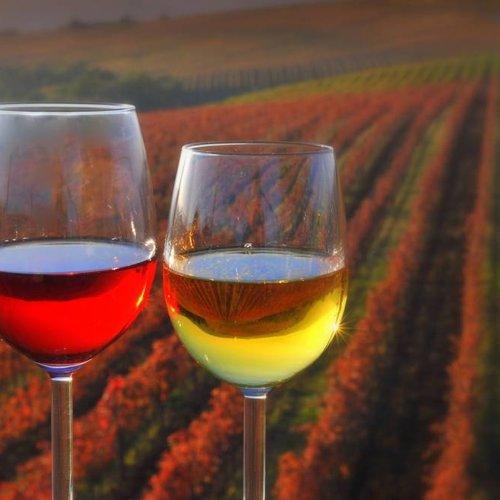 Sloveense Wijn