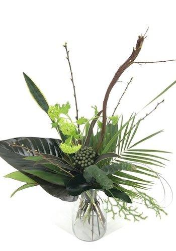Abelia Meesterbinders Natuurlijk groen