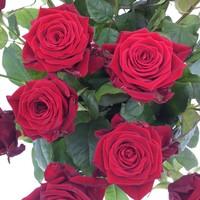 thumb-Boeket rode rozen bestellen-3
