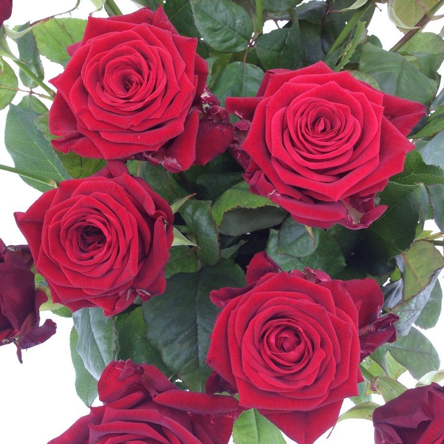Boeket rode rozen bestellen-3