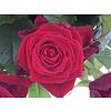 Abelia Meesterbinders Boeket rode rozen bestellen
