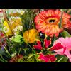 Abelia Meesterbinders Boeket seizoensbloemen