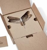 NAV Scandinavia WONDER Dragonfly black