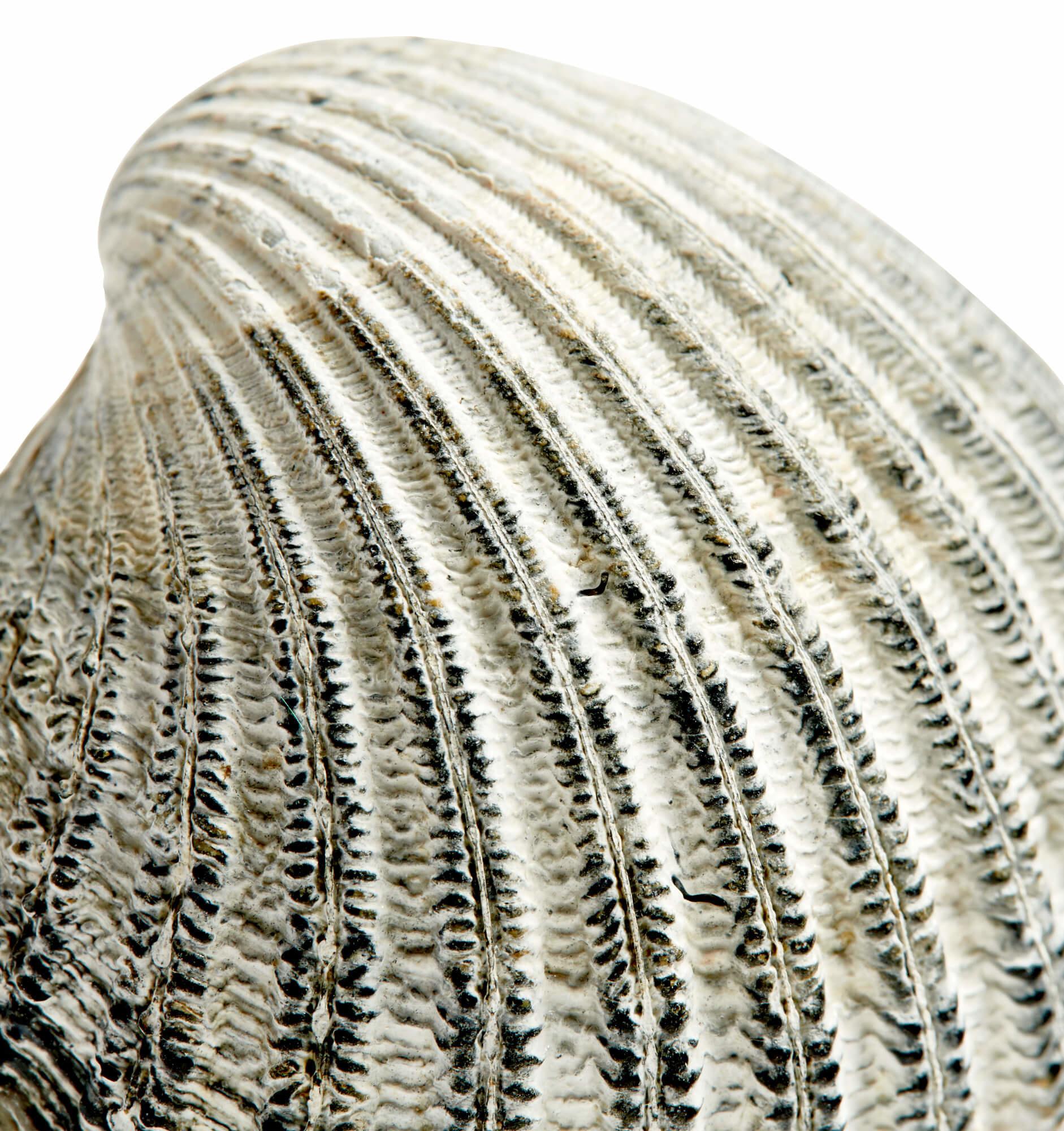 NAV Scandinavia Lokken schelp kapstok - grijs