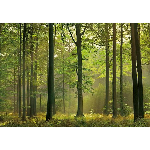 Dutch Wallcoverings Wizard & Genius fotobehang Autumn forest
