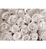 Dutch Wallcoverings Fotobehang Witte rozen