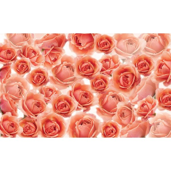 Dutch Wallcoverings Fotobehang Zalm roze rozen