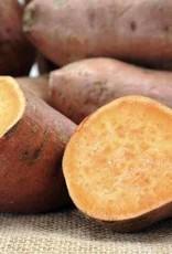 Zoete aardappelschotel met spinazie en belegen kaas (V)