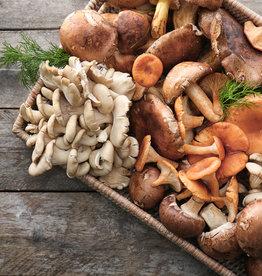 Rijst, tuinbonen, paddenstoelen (V)