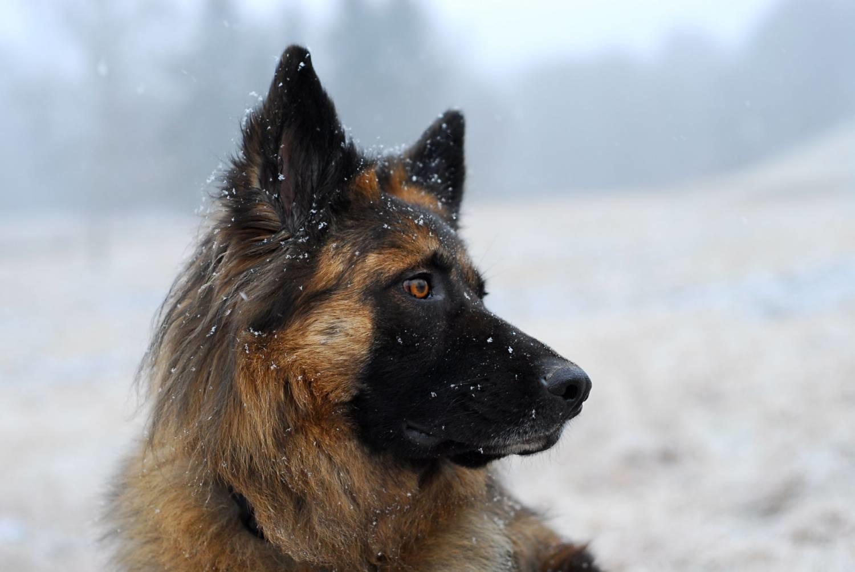 Artgerechte, ausgewogene und natürliche Ernährung für Hunde