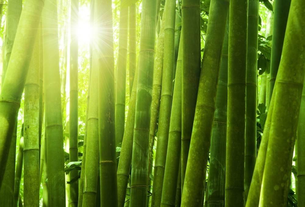 Koudschuim topmatras bamboe 160x220