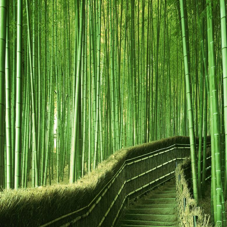 Ervaar de voordelen van bamboe