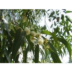 Allesreiniger - Eucalyptus - Fles 1L