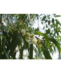 Allesreiniger Sauna - Eucalyptus - Fles 1L