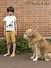 Emile et Ida Emile et Ida T-shirt Tee Shirt CHATCHIEN écru O048