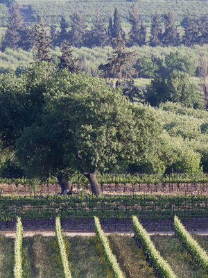 Galil Mountain Flagship wine 'Meron' 2015