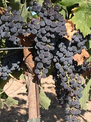 Well of Wine Merlot 2017