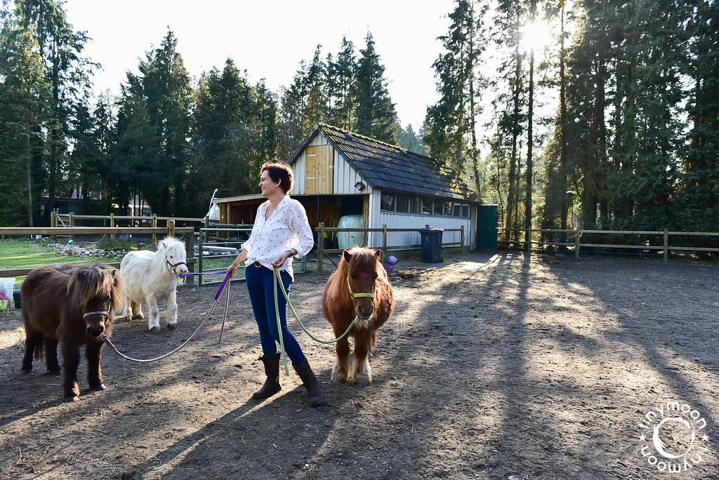 Brenda Kroon | Gelukpaarden