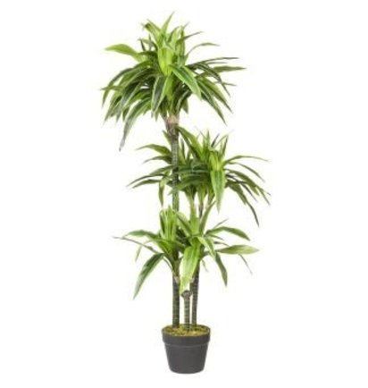 Multi Meubel HTT Decorations – Kunstplant Dracaena lemon lime (120×50 cm) - Groene Kunstplanten