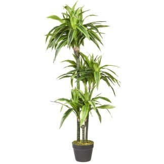Multi Meubel HTT Decorations – Kunstplant Dracaena lemon lime (120×50 cm)
