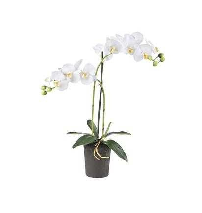Multi Meubel Kunstplant Orchidee / Phalaenopsis 2-tak wit H53cm - Bloeiende Kunstplanten