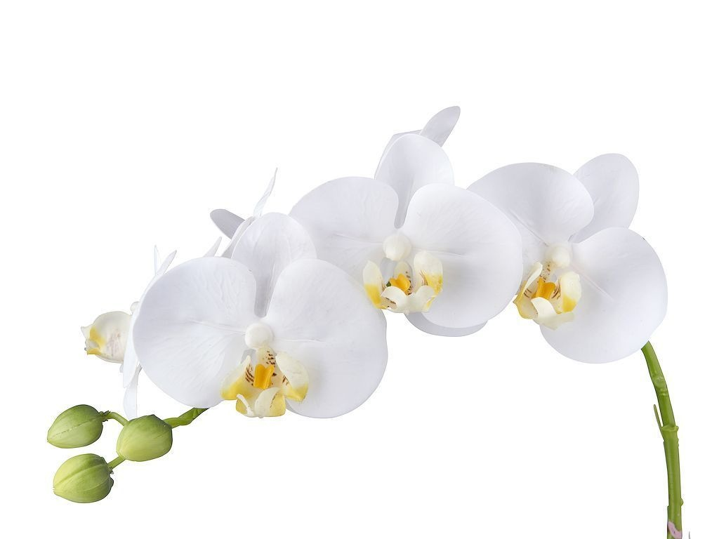 Multi Meubel Kunstplant Orchidee / Phalaenopsis 3-tak wit H63cm