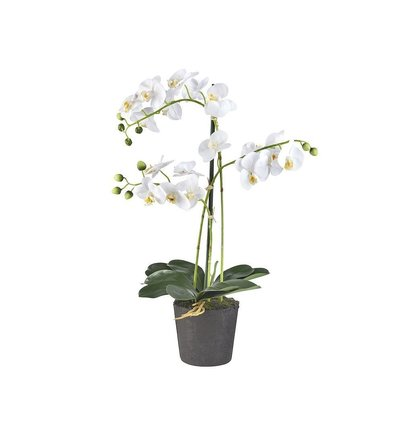 Multi Meubel Kunstplant Orchidee / Phalaenopsis 3-tak wit H63cm - Bloeiende Kunstplanten