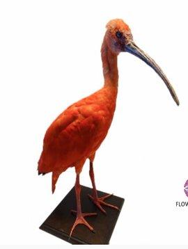Pot en Vaas Rode Ibis