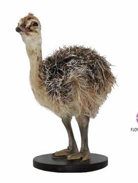 Pot en Vaas Opgezette struisvogel