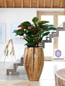 Large flower pot Banana