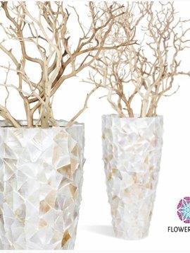 Muschel Vase Jeddah L