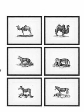 Eichholtz Prints Historical Animals