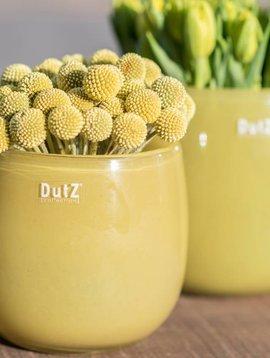 DutZ Übertöpfe mustard