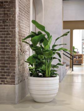 Flower pot XXL Sydney