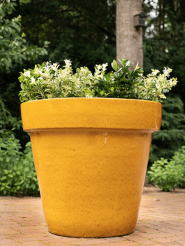 Gelbe Blumentopf Izamal