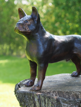 Beeld bulldog Max