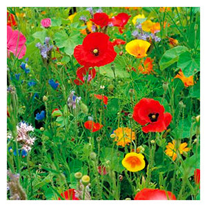 Ten Have Wildbloemenmengsel 1- en meerjarig 250gram