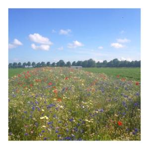 Ten Have Functionele Agro Biodiversiteit (FAB) mengsel