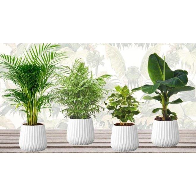 Set van 4 verschillende kamerplanten