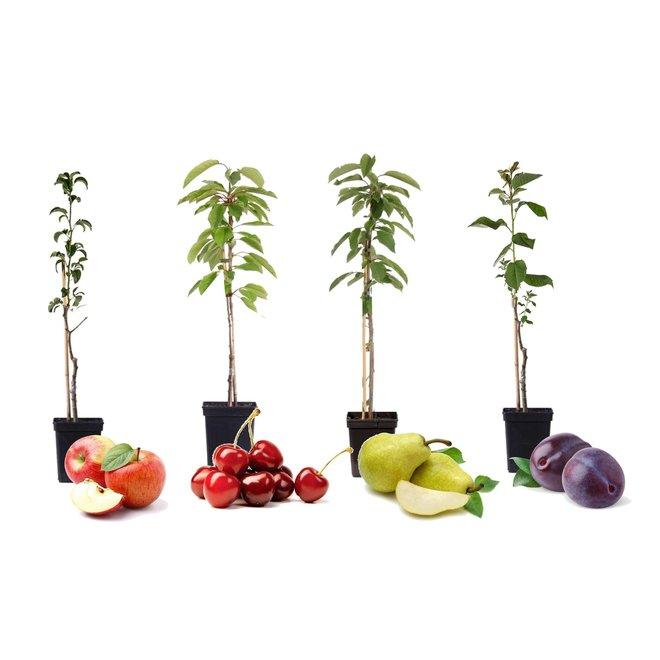 Set van 4 winterharde Pilaar-Fruitbomen