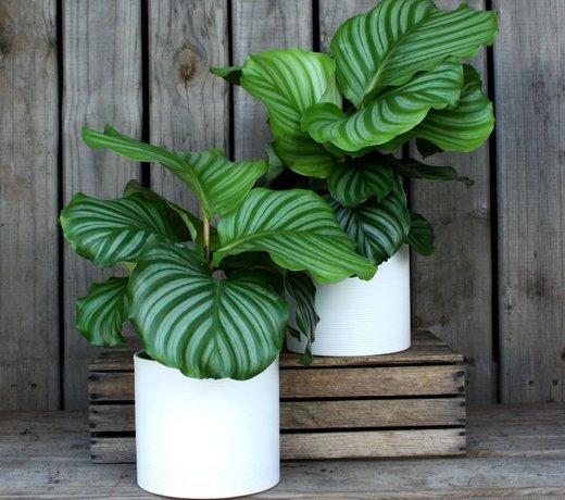 Planten voor binnen en buiten