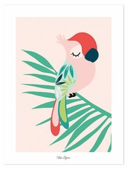 Producten getagd met papegaai