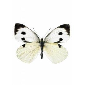 KEK Amsterdam KEK Amsterdam muursticker vlinder wit